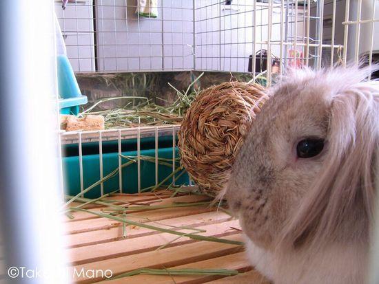 Enjoying Life Rabbit My Rabbit Bunny
