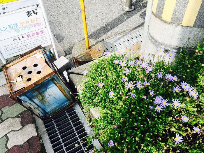 Flower Flowerporn Flower Collection Violet