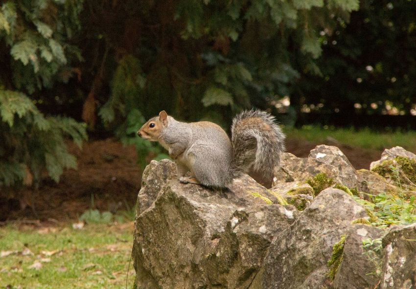 Taking Photos Squirrel Photo Squirrel Squirrel Closeup Grey Squirrel Ground Squirrel
