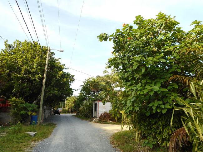 Honduras Roatan Bay Islands Cable Day Nature No People Outdoors Road Sky The Way Forward Tree