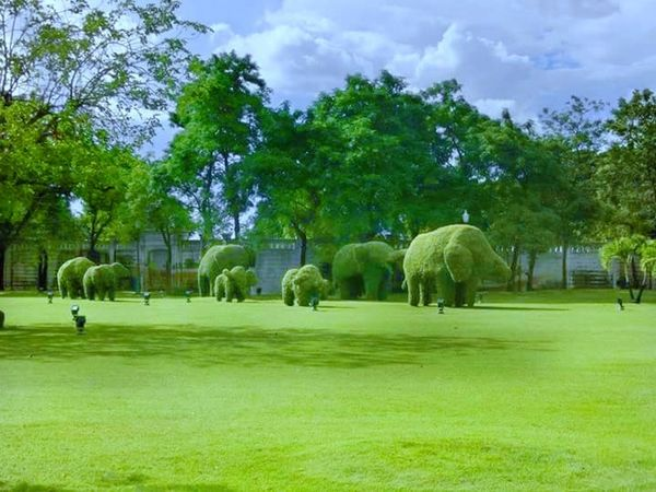 Tree Green Color Grass Cloud - Sky Sky Palm Tree Outdoors Mammal Day Elephant Nature Animal Themes Domestic Animals Golf No People Golf Course Thailand Love Thailand🇹🇭 Thailand Photos Beauty In Nature Thailand Trip