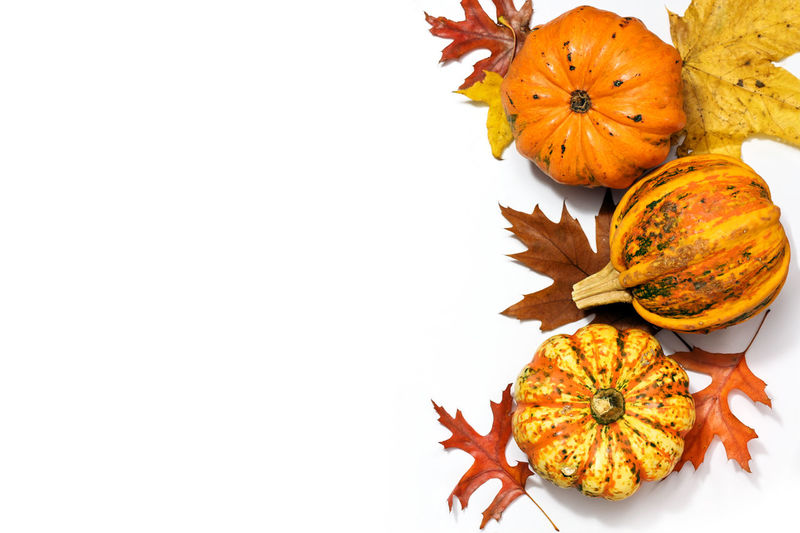 Close-up of orange maple leaves against white background