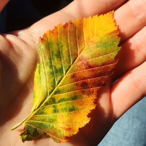 In Hands Autumn Beauty In Nature
