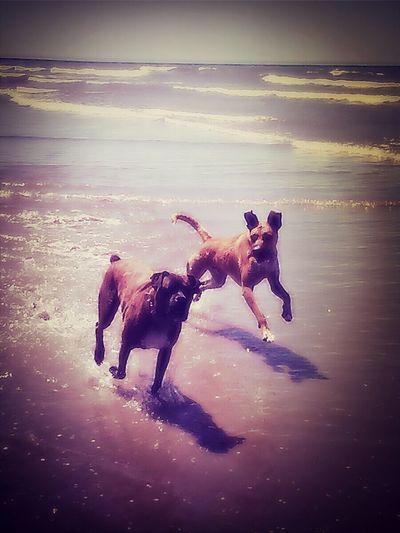 Milo y yaco en la playa.... 22505 150013 I Love My Dog