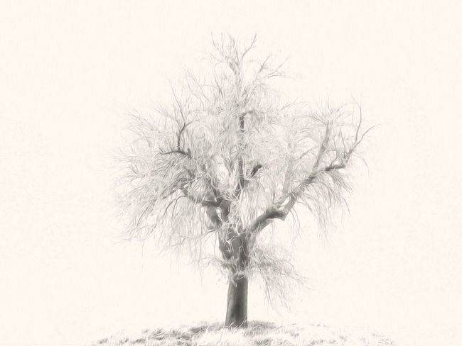 Mr. White ArtWork Bavaria Christmas Franken German Nature Tree Winter Art Bare Tree Beauty In Nature Blackandwhite Bold Branch Christmas Tree Day Frankonia IPhone IPhoneography Monocrhome Nature No People No People# Oil Outdoors Outside Snow Still Life Tree White White Background Winter