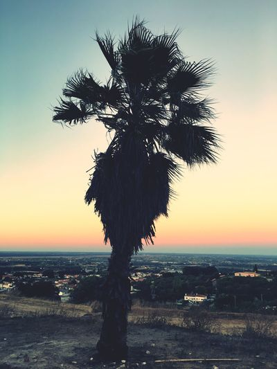 High Angle View View From Above Cityscape Palm Tree Horizon Sky Sunset Beauty In Nature Nature Plant Sea Scenics - Nature Tree Tranquility Horizon Land Tranquil Scene No People Silhouette Outdoors Growth