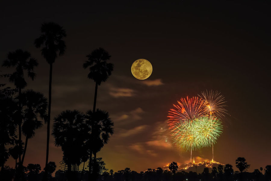 Fireworks with Sugar Palm Tree and Full Moon night on background. Full Moon Moon Beauty In Nature Celebration Firework - Man Made Object Firework Display Illuminated Low Angle View Nature Night Outdoors Palm Tree Scenics Silhouette Sky Sugar Palm Tree