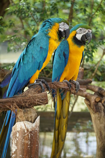 Gold and blue macaw Animal Themes Animal Wildlife Animals In The Wild Beauty In Nature Bird Blue Branch Close-up Day Focus On Foreground Gold And Blue Macaw Macaw Nature No People Outdoors Parrot Perching Tree