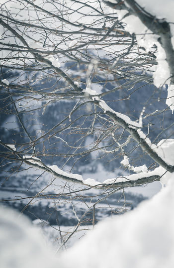 Close-up of snow covered bare tree
