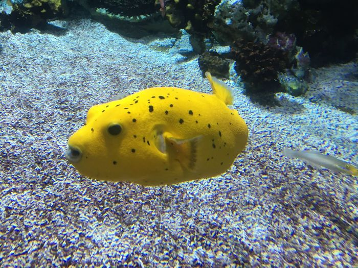 Underwater Sea Life Animal Themes One Animal UnderSea Animals In The Wild Animal Wildlife Yellow Sea Water Beauty In Nature