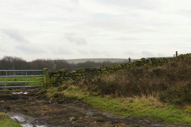 Fence Grass Sky Nature Tranquility Outdoors Day No People Beauty In Nature Tree Water Landscape Freshness Winter Nature On Your Doorstep Calderdale Windswept Yorkshire Fieldscape Beauty In Nature Gate Cloud - Sky Scenics Nature Farm