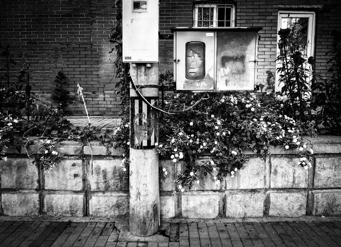 Blackandwhite Flowers No People Street Streetphotography Urban Tranquility Urban Exploration China Beijing Exploring Life City Street Black And White
