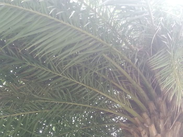 Topical Paradise Tropical Paradise Palm Tree Beauty In Nature Peaceful