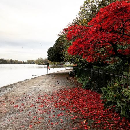 Red alert Red Nature Beauty In Nature Water Autumn Outdoors Tranquility Scenics Urbanpark Postcode Postcards