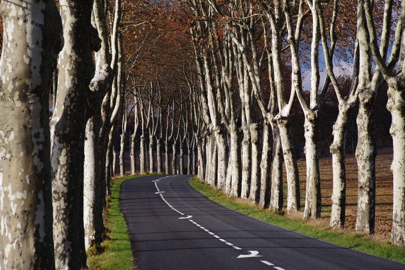 Curve Alignment Of Trees Alley No People Plane Trees Road Sign South France