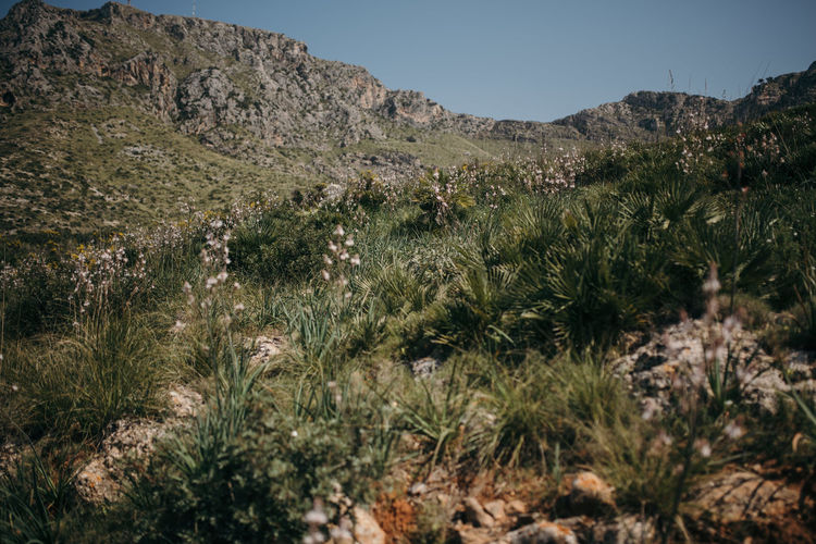 Mallorca wild landscape Mallorca Mallorca (Spain) Mediterranean Landscape Beauty In Nature Clear Sky Environment Grass Green Color Growth Land Landscape Mallorca Landscape Mountain Mountain Range Nature Outdoors Plant Rock Scenics - Nature Sky Tranquil Scene Tranquility Tree