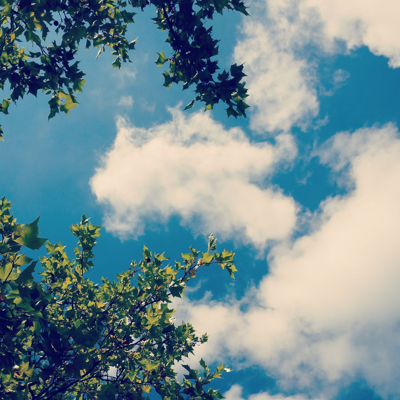 sky, low angle view, nature, beauty in nature, growth, cloud - sky, tree, day, outdoors, no people, scenics, plant, branch, freshness