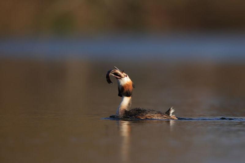 View of bird eating in lake