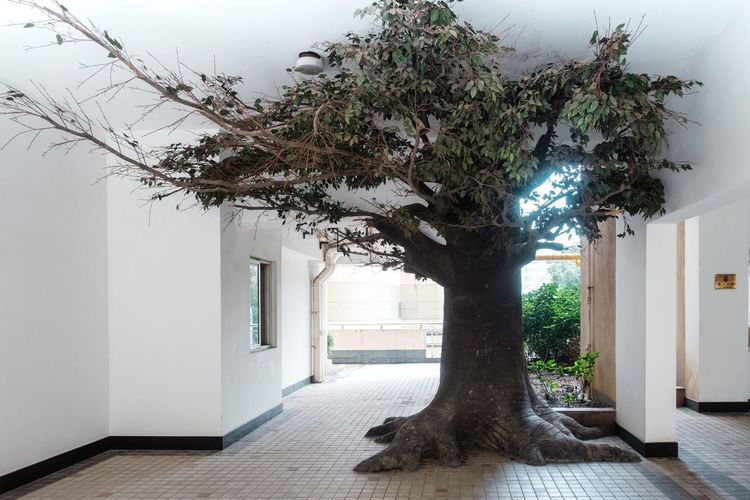 Tree... Architecture Tree Built Structure Building Building Exterior Plant Nature Day Growth Entrance No People Architectural Column Residential District City White Color House Door A New Perspective On Life