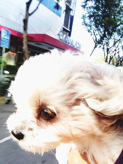 doggydash..:) Mydog Stewiethedog DoggyLove