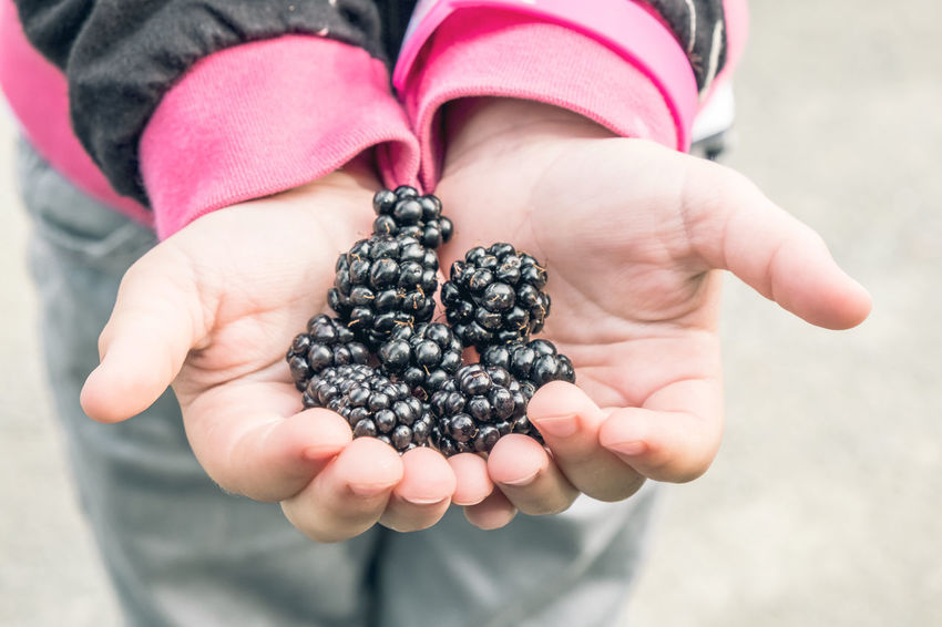 Homegrown Produce Blackberry Brambleberry Childhood Focus On Foreground Food And Drink Freshness Fruit Handful Hands Cupped Harvesting Healthy Eating Holding Human Body Part Human Hand Lifestyles Nature Offering One Girl Only One Person Outdoors People Raw Food Ready-to-eat Real People