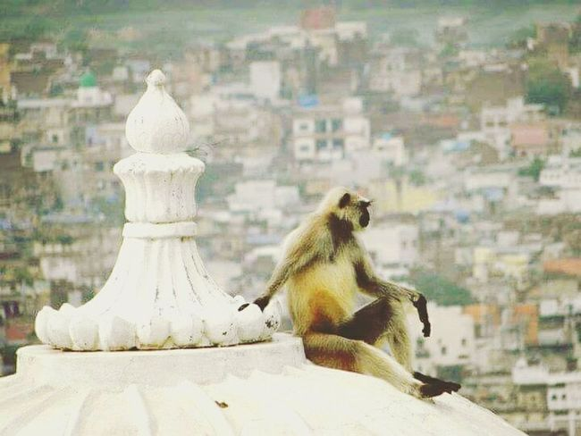 Just relaX, Animal Themes Building Exterior Zoology Animal Themes Outdoors Perching One Animal Monkey Rest & Relax Focus On Foreground One Animal Building Exterior Architecture City Built Structure Wildlife fresh on EyeEm Animals In The Wild Cityscape Perching Full Length Zoology Outdoors City Life