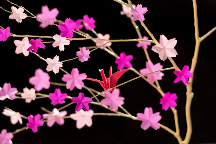 Beauty In Nature Black Background Close-up Flower Flower Head Fragility Freshness Growth Nature Night No People Origami Outdoors Petal Pink Color Plant Tsuru