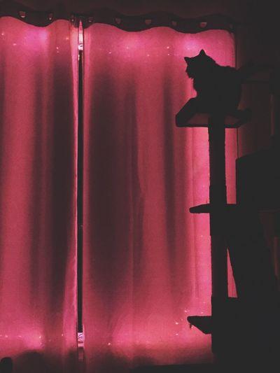 Cats Cat Cattree Lights Pinklights OrangeLights Halloween Decorations Silhouette