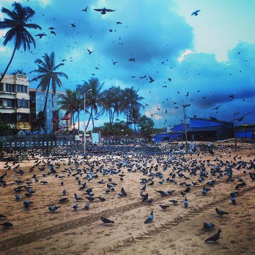 Beach Pigeons Birds Flying Chirping Trees Flock Cluster Buildings Sand InstaMix Instagram Instahub Instagood Clouds Cloudporn Sky Igers Instabirds Stalls Picoftheday Photooftheday Random India Mumbai
