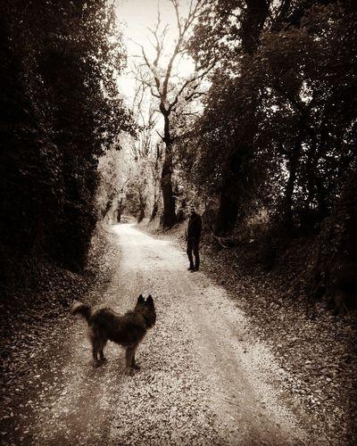 Rear view of dog walking on street