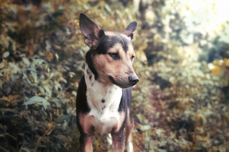 Handsome mountain dog One Animal Animal Themes Canine Dog Mammal Domestic Animals Domestic Pets Animal Vertebrate Focus On Foreground Day Portrait No People Nature Looking Standing Land Looking At Camera Jack Russell Terrier