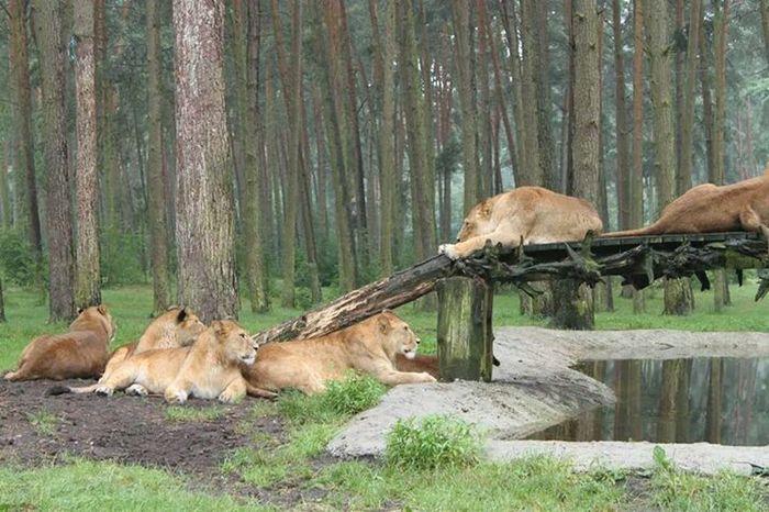 Animales Serengeti-Park, Hodenhagen