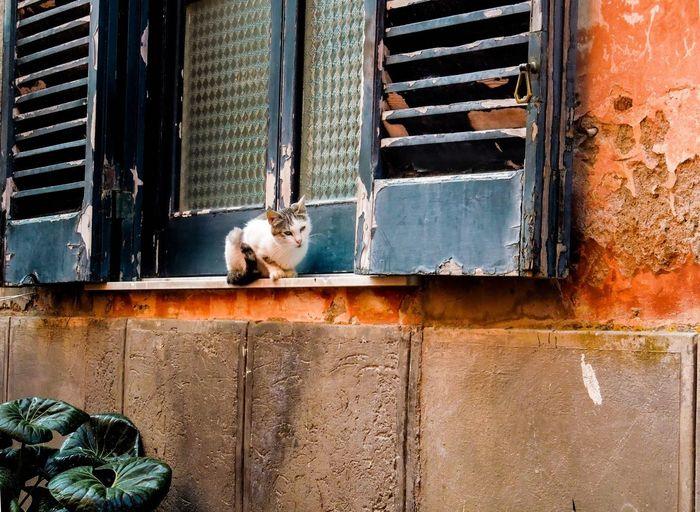 Stray Cat Sitting At Window
