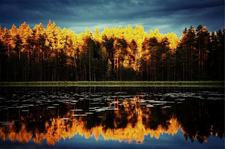 Polaroid Camera Reflection Nature Water Beauty In Nature