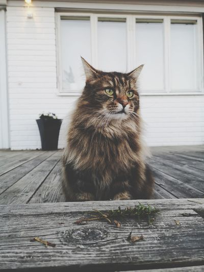 Portrait of cat sitting on porch