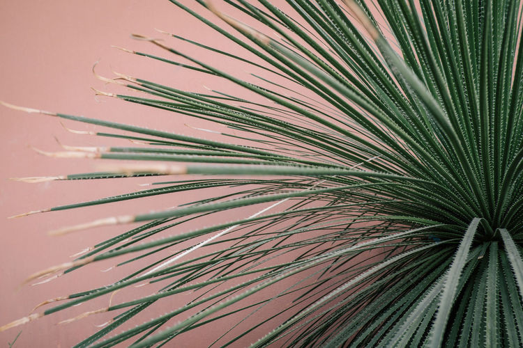 Hortus Botanicus Nature Day Growth Plant Beauty In Nature No People Leaf Palm Leaf Tree Green Color Palm Tree Close-up Plant Part Full Frame Tropical Climate Pattern Outdoors Natural Pattern Backgrounds Frond Pine Tree Coniferous Tree Needle - Plant Part