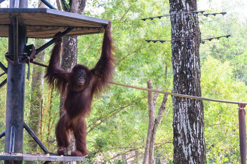 Monkey hanging on fence