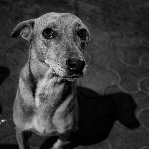 He is my favorite Dog Portrait Monochrome Blacknwhite Shadows Loveineyes Street Photography Straydog Matunga Mumbai DogsofMumbai
