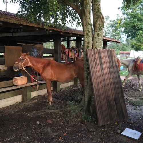Domestic Animals Animal Themes Horse Mammal Livestock One Animal Tree Outdoors Nature No People Day