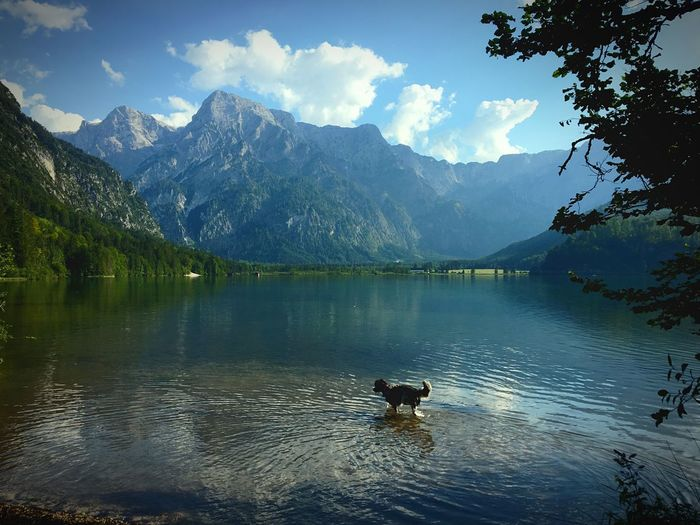 Xenia and the Almlake Upper Austria  Almsee Austria Doglover Dog Love Enjoing Natur Enjoying Life ♥ Dogs Water Mountain Beauty In Nature Cloud - Sky Scenics - Nature Lake Sky Nature Day Plant Reflection