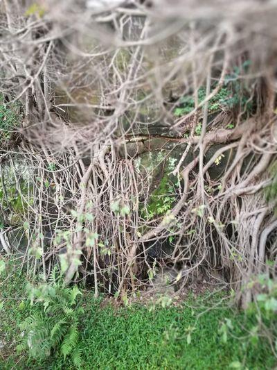 Nature Roots Of Life Roots Of Tree Roots Of Tree - Roots Of Life Entangled Roots