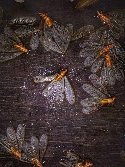 Mayfly Close-up Symbiotic Relationship Insect Bumblebee Caterpillar Praying Mantis Grasshopper