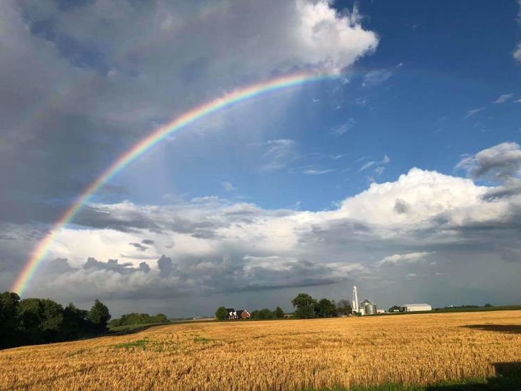 Combine Harvester Tree Cereal Plant Rural Scene Storm Cloud Agriculture Rainbow Summer Field Multi Colored