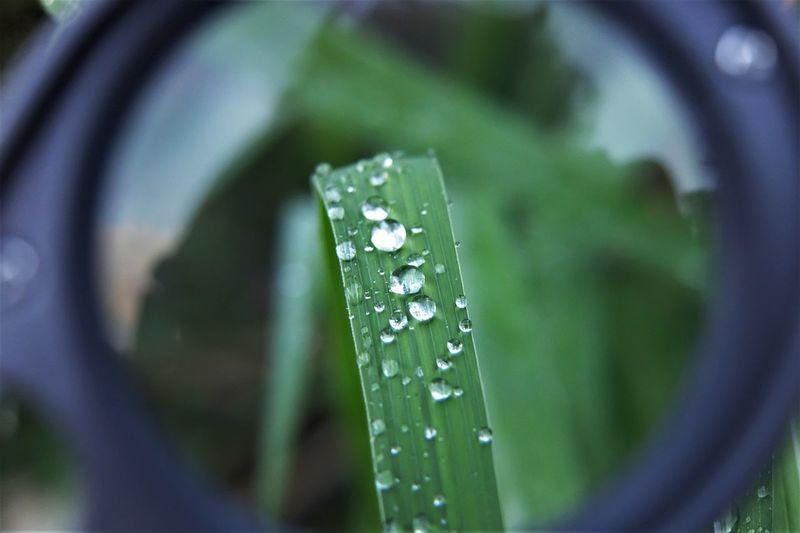 Close-up of wet grass