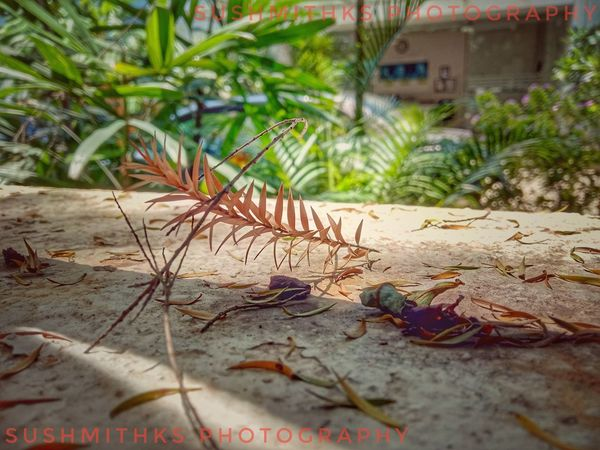 Drygrass Lenovok8plus Mobileclick Snapseed Hobby Sushmithks Sand Tree Building Exterior Close-up Built Structure Plant Grass
