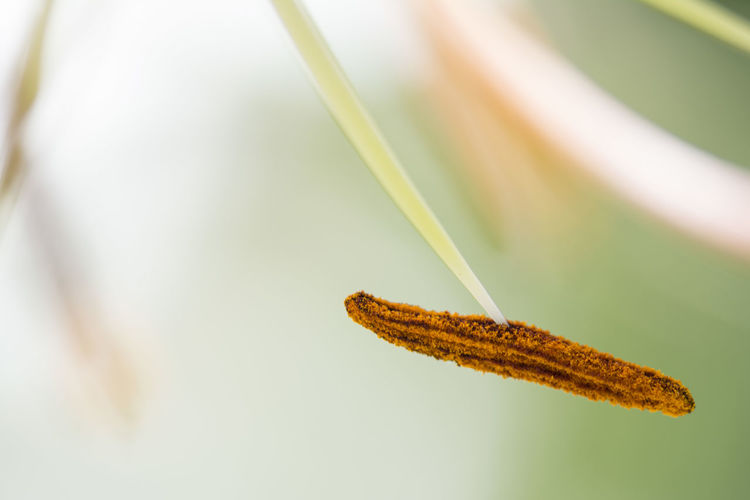Close-Up Of Pistil