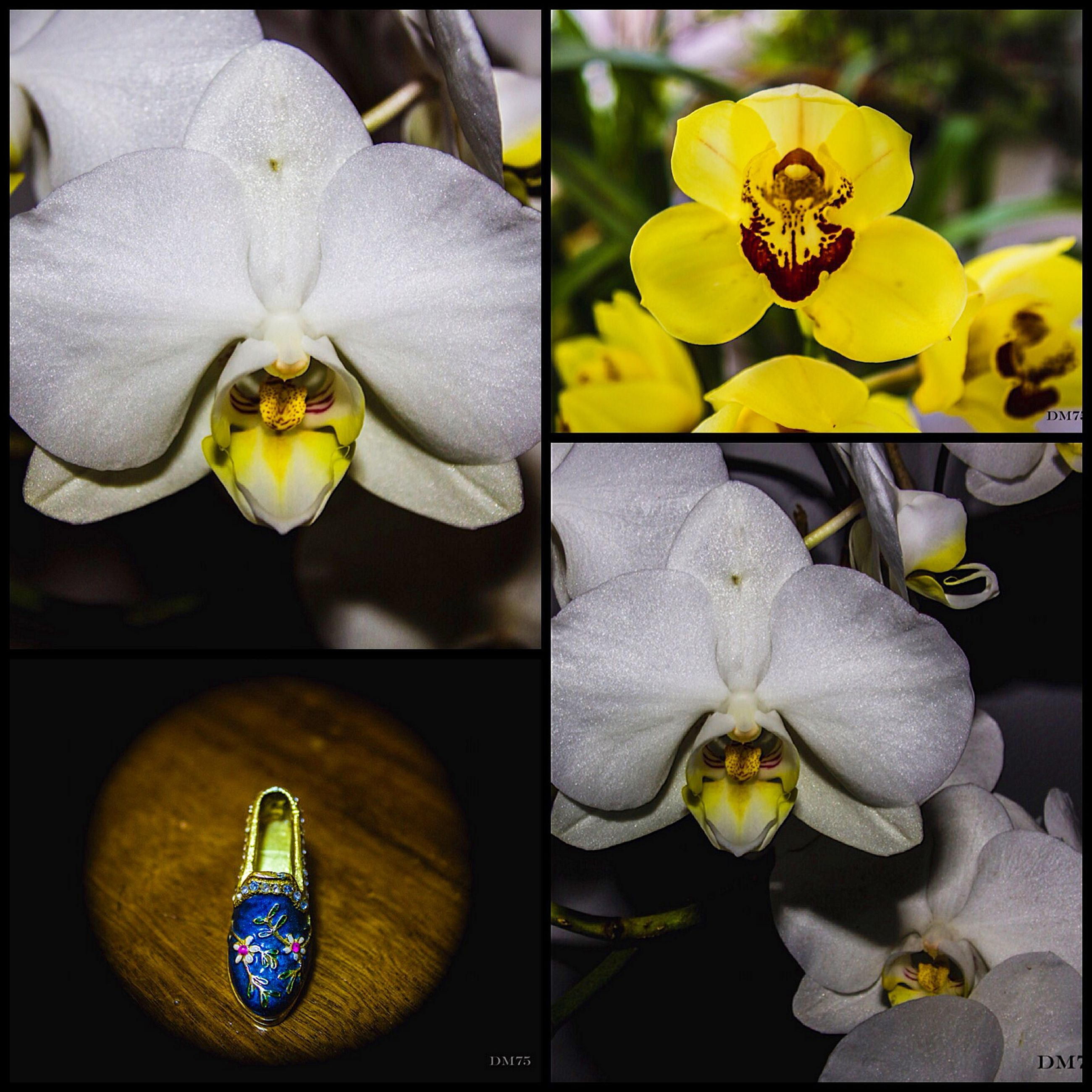 flower, petal, fragility, flower head, indoors, freshness, transfer print, close-up, yellow, vase, orchid, decoration, beauty in nature, auto post production filter, focus on foreground, nature, plant, no people, blooming, glass - material