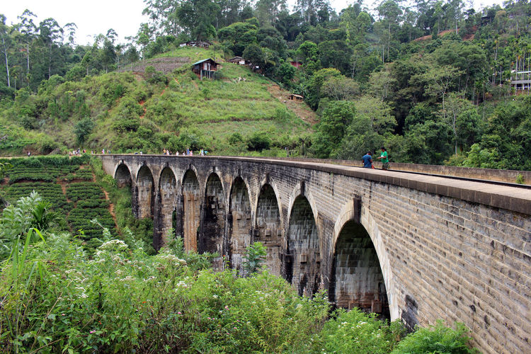 Arch bridge amidst trees and plants