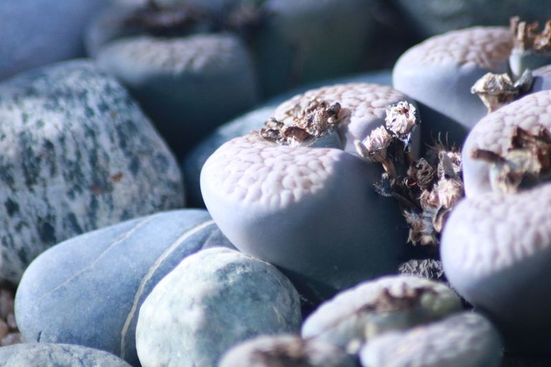 Close-up of shells on pebbles