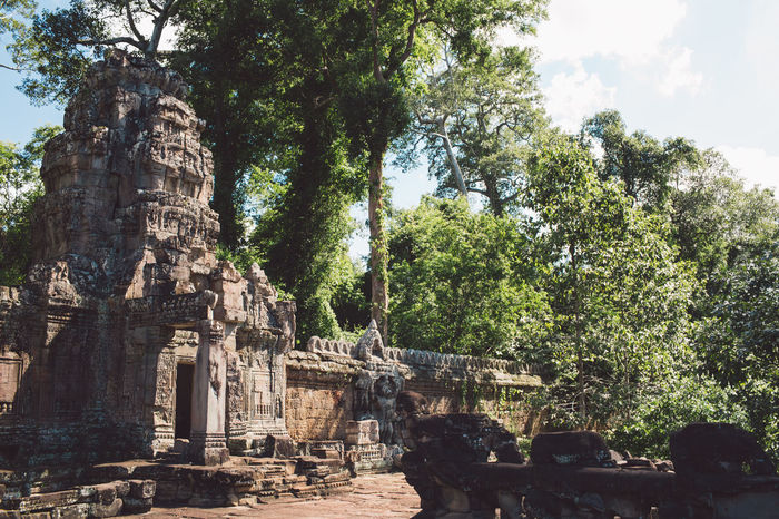 Siem Reap Cambodia Angkor Tree Place Of Worship Plant Belief Religion History Architecture Spirituality The Past Built Structure Ancient Travel Destinations Travel Tourism Day Nature Old Ruin Old No People Ancient Civilization Outdoors Archaeology Ruined